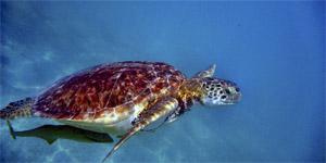 werelderfgoed-nominatie-van-het-bonaire-national-marine-park