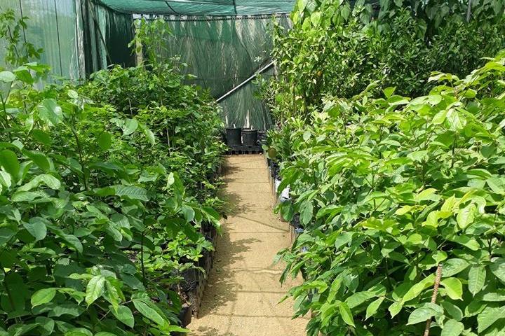 Echo verkoopt inheemse planten